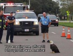 It's American Eagle Day So Feel Free To Enjoy These Majestic Memes - World's largest collection of cat memes and other animals Funny Animal Memes, Cute Funny Animals, Funny Animal Pictures, Cat Memes, Funny Cute, Funny Jokes, Hilarious, Animal Funnies, American Humor