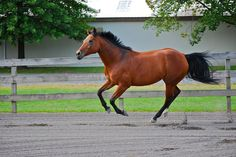 #Calming the Energetic Horse - Does Your #Horse have #TooMuchEnergy? Check out these solutions!