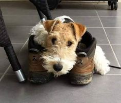 These boots are made for walking. So walk me !