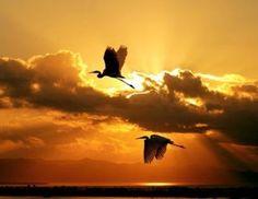 Faith In God, Bald Eagle, Birds, Celestial, Sunset, Animals, Outdoor, Beautiful, Herons