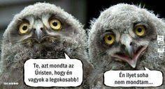 Owl, Bird, Animals, Owl Bird, Animales, Animaux, Owls, Birds, Animal