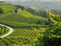 Strada del vino Colli Euganei, la più amata d'Italia!