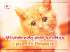Linda tarjeta de amor de gatito con frase