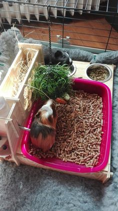 Animals And Pets, Funny Animals, Cute Animals, Guinea Pig Information, Pig Ideas, Bunny Rabbit, Guinea Pigs, Rabbits, Kids
