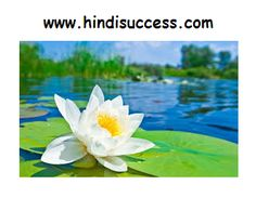 Shapla (White lotus) is a beauty in itself. The white water lily or lotus signifies peace, spirituality and calmness. Hd Flower Wallpaper, Lily Wallpaper, Wallpaper Pictures, Desktop Pictures, Wallpaper Desktop, Hd Desktop, Mobile Wallpaper, White Lotus Flower, White Flowers