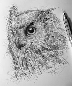 #sketch  #drawings #sketchart  #efrainmalo #animalart #animalsketch #animaldrawing #owldrawing