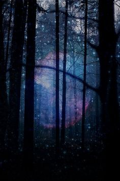Starry woodland forest - looks like something out of a fairy tale. Fantasy World, Fantasy Art, Fantasy Forest, Magic Forest, Mystical Forest, Dark Forest, Dark Tales, Nature Spirits, Woodland Forest
