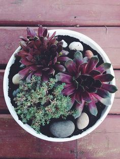 Potted Beauty