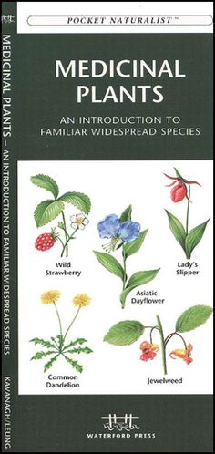 list of herbal medicines and their uses pdf