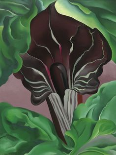 Jack-in-Pulpit No.2