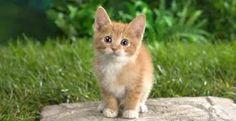 gattino tenerino ☺☻♥