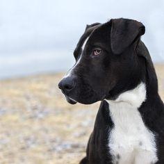Shannon Johnstone photography - Landfill Dogs