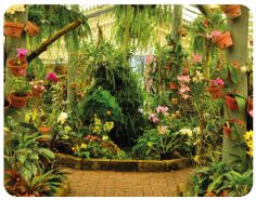 """20th Australian Orchid Council Conference and Show """"Orchids in Paradise"""" Mackay Orchid House"""