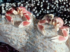 An Intimate Look at Sea Creatures Large and Tiny  Read more: http://www.rd.com/slideshows/tiny-sea-creatures/#ixzz3GsrUcNLw