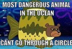 Sea bear!