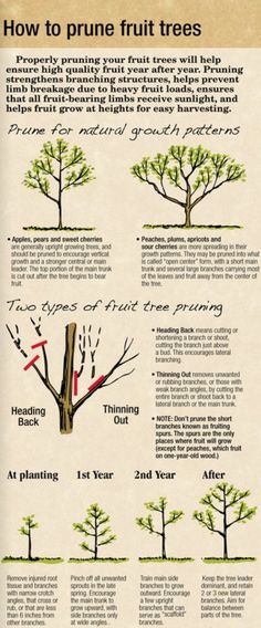 How to prune fruit trees. #garden #fruit