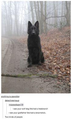 Sirius eres tú?