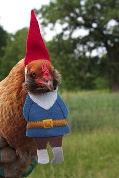 chicken wizard wear via riotclitshave Cause you know how chickens are.