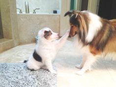 Puppy pets his mother, so cute!