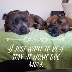 I just want to be a stay at home dog mum. staffies. dogmum. dogsofpinterest .staffy. I love staffies.