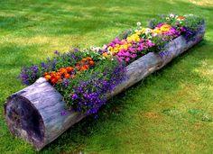 Si conseguimos un tronco como éste lo decoramos con flores y velas y se verá espectacular como decoración.