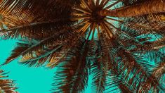 Leander D'Ambrosia Contemporary Jewellery and Accessories Mdf Frame, Landscape Photography Tips, Tree Wallpaper, Feng Shui, Palm Trees, Free Images, Ocean, Clouds, Conscience