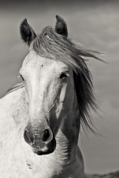 Storm Pony by Alison Timmons http://www.flickr.com/photos/64792694@N03/