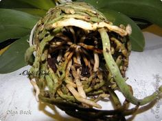 Мастер-класс Орхидеи Фаленопсис Phalaenopsis  Пересадка