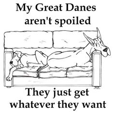 Mine aren't spoiled at all!!! (OOPs, sorry I told a little fib...they are just happy).