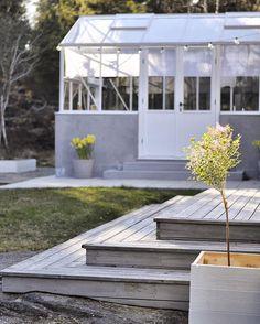 Detta ljus på kvällarna alltså, och middag i växthuset! Har planterat en dvärgsyren som redan blommar vid altanen så nu känns det verkligen som vår.  #greenhouse