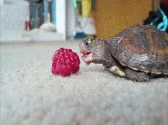 """Patience is my one virtue."" 