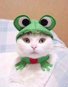 """Mamaw loved cats and frogs. She had a white cat with one green eye and one blue eye. She called her """"Kitty Blue Eye"""". Funny Cats, Funny Animals, Cute Animals, I Love Cats, Crazy Cats, Costume Chat, Frog Costume, Chat Halloween, Cat Dressed Up"""