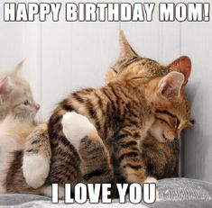 Prime 35 animal hugs the online that's good we wager that Cute Kitten Gif, Cute Kittens, Cats And Kittens, Ragdoll Cats, Happy Birthday Mom Meme, Mom Birthday, Lol So True, Animal Hugs, Funny Cats And Dogs