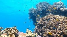 Discover the best of the Great Barrier Reef. Guided Snorkel Tours, Glass Bottom Boat tour, quality equipment, food and beverages. Glass Bottom Boat, Australia Travel Guide, Boat Tours, Great Barrier Reef, Sea Creatures, Snorkeling, Under The Sea, Best Hotels, Jet Set