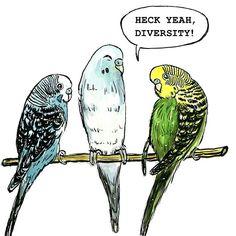 Heck Yeah Diversity Budgerigars