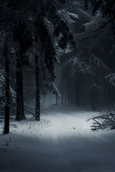 Sleeping Forest https://www.pinterest.com/dcindcmedia/ Collection of winter photography