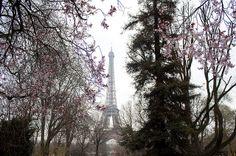 Eiffel Tower Springtime | ... _Paris - The Eiffel Tower in Spring | Flickr - Photo Sharing