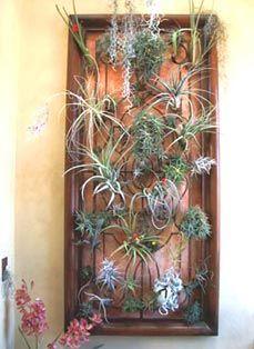 Bromelia, Wall planter Striking and low maintenance