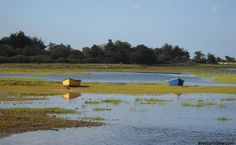 L'étang de l'île d'Arz