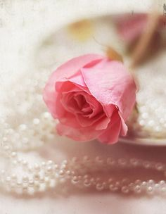 ❤ pink rose with pearls
