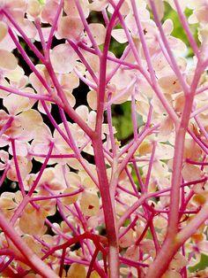 orchid  #wedding #orchids #flowers www.BlueRainbowDesign.com