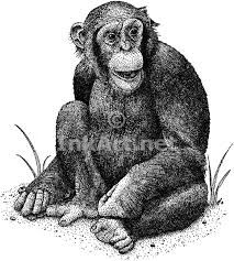 Image result for pen and ink drawings of monkeys
