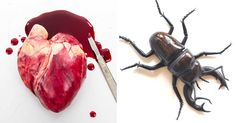 Incredibly Realistic Chocolate Art You Wouldn't Dare To Eat