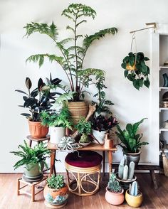 Continuing to marvel at the fast friendship forming between botanicals and vintage over at our @mavencollectpdx pop-up plant shop. Also, crushing way hard on tree ferns right now! - plants