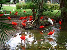 Fotografia tirada no Mangal das Garças em Belém do Pará.