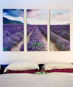 Canvas Pop with Lavender Fields.
