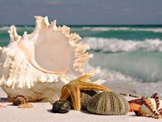 MSD Mouse Pad Natural Rubber Mousepad Image of Ocean Beach Summer Tropical Shell sea Water Nature Vacation Blue Sand Seashell Travel Background Seashore The Ocean, Ocean Life, Ocean Beach, Sand Beach, Ocean Waves, Summer Beach, Nature Beach, Waikiki Beach, Nature Pics