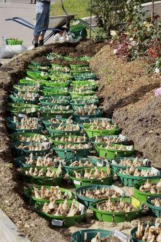 37 Einfache und clevere Gartenideen mit geringem Budget #budget #clevere #einfache #gartenideen #geringem