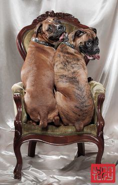 We fits, we sits!  Reminds me of when we took Lexie and Tilla to have them photographed!