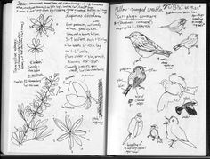 Image result for birds singing drawings